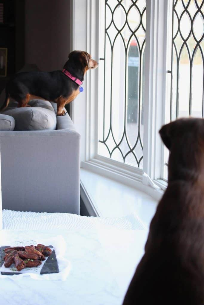 A wiener dog and chocolate lab looking out the window.